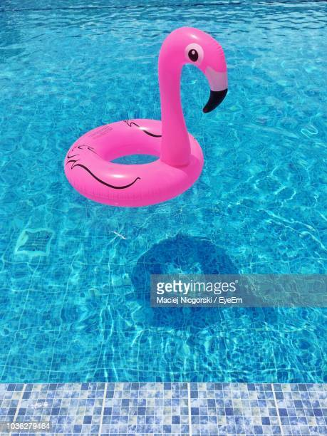 flamingo shaped inflatable ring floating on swimming pool during sunny day - inflatable ring stock pictures, royalty-free photos & images