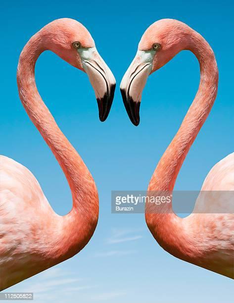 flamingo with blue sky - flamingo imagens e fotografias de stock