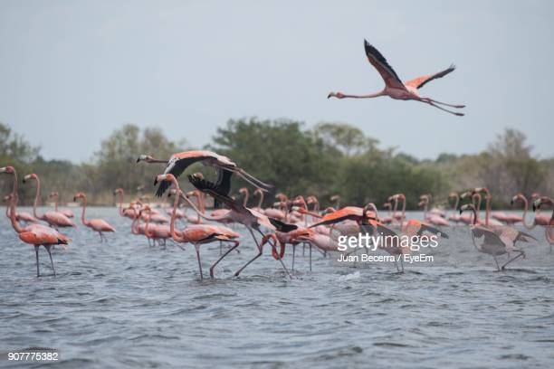 Flamingoes Flying Over Lake Against Sky