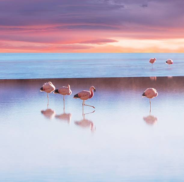 Flamingoes in Bolivia