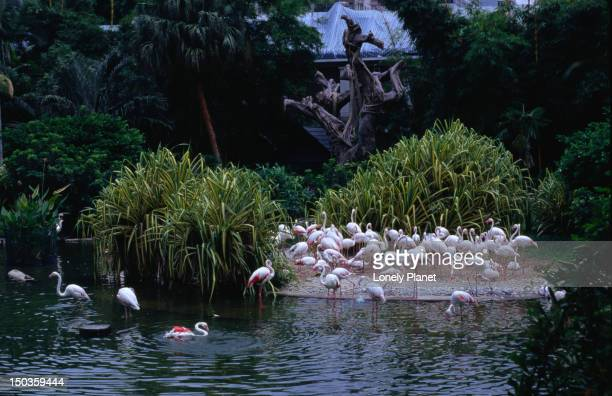 Flamingoes in Kowloon Park - a refreshing oasis to escape the crowds