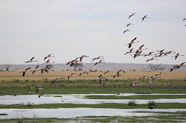 Flamingos, Amboseli National Park, Kenya Wall Art