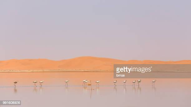 Flamingos and Dunes