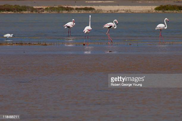 flamingos and egret ebro delta. - delta del ebro fotografías e imágenes de stock