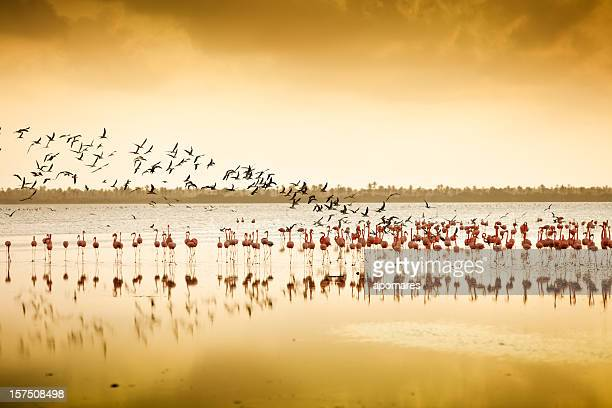 Flamingos and seaguls at a Tropical coastal lagoon