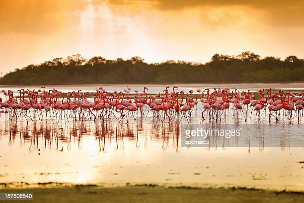 Flamingos at a Tropical coastal lagoon