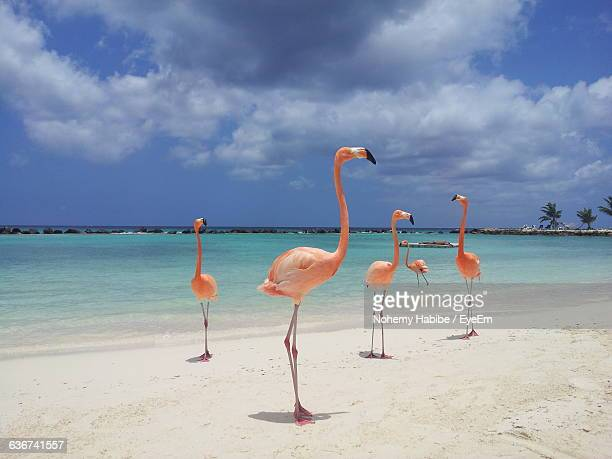 flamingos at beach against sky - flamingo stock pictures, royalty-free photos & images
