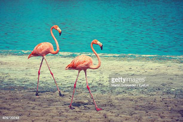 Flamingos At Beach