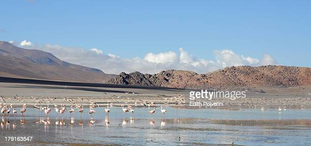 flamingos at Laguna Grande