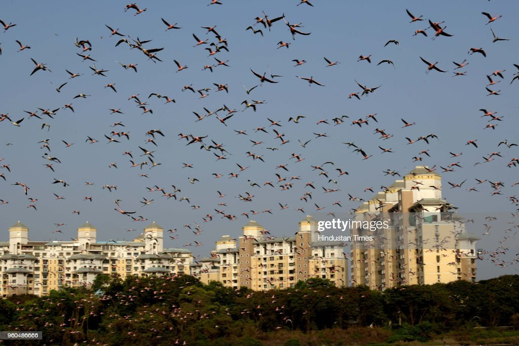 Flamingos At NRI Lake Near Palm Beach