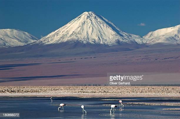Flamingos at Salt lake Salar de Atacama, Atacama desert, northern Chile, South America