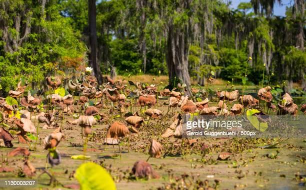 flamingos garden - gerold guggenbuehl stock-fotos und bilder