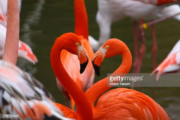 flamingos heart - flamingo heart stock pictures, royalty-free photos & images