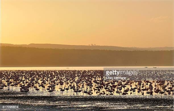 Flamingos in a lake with beautiful sky