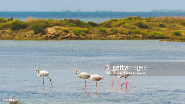 flamingos in the water - delta del ebro fotografías e imágenes de stock