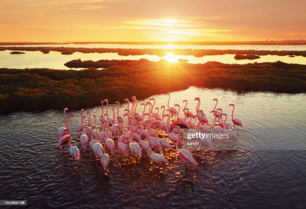 Flamingos im Feuchtgebiet bei Sonnenuntergang : Stock-Foto