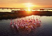 Flamingos in Wetland During Sunset