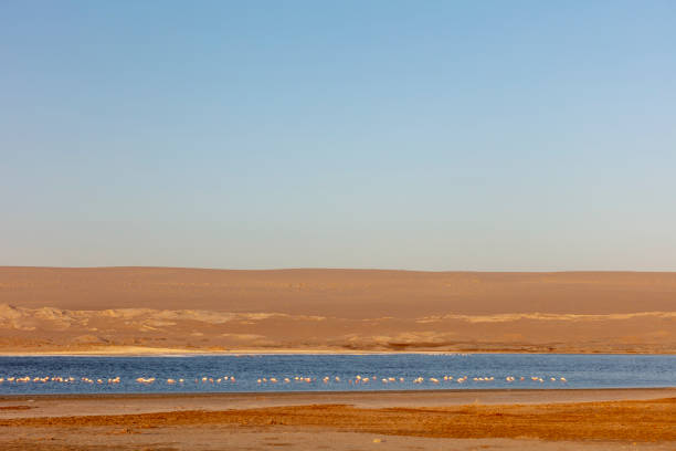 Flamingos on the remote Agate Beach in the remote, former diamond-mining town Luderitz in southwestern Namibia