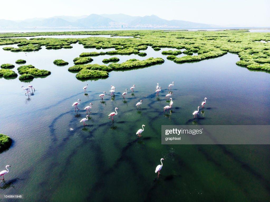flamingos : Stock-Foto