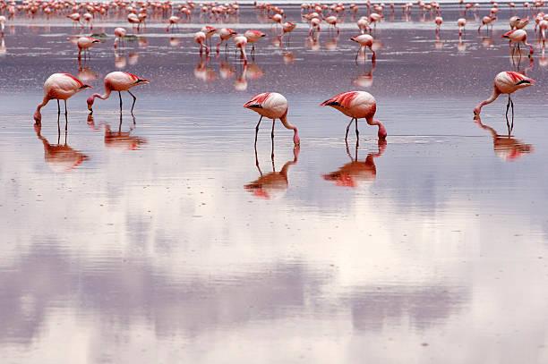 Flamingos Wall Art
