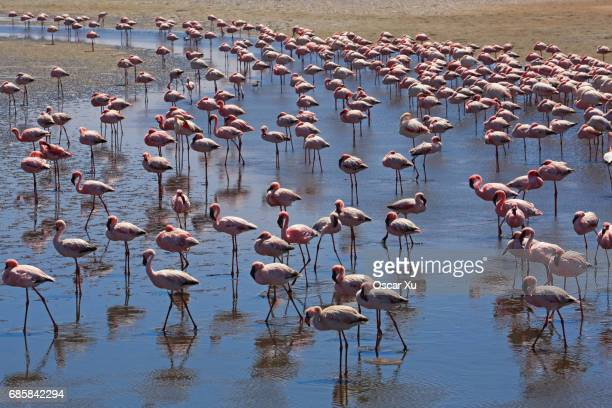 flamingos - walvis bay stock photos and pictures