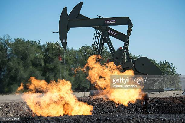 Flaring natural gas burns by jack pumps at an oil well near Buford North Dakota in the Bakken oil fields
