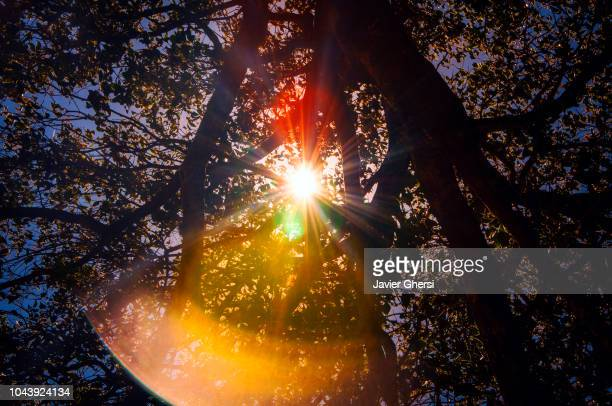 flashes of the sun among the foliage of a tree, in rosario, santa fe, argentina. - santa fe province stock photos and pictures
