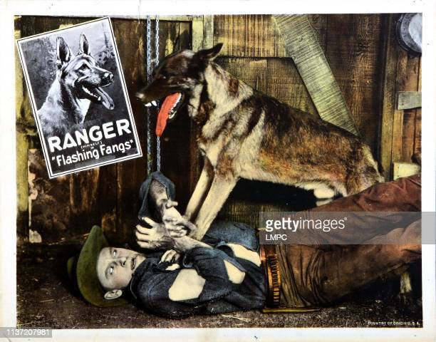 Flashing Fangs lobbycard Ranger 1926
