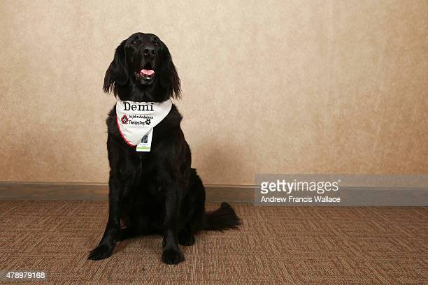 TORONTO ON JUNE 24 Flat coated retriever 'Demi' June 24 2015 Therapy dogs will be roaming the Pan Am village helping stressed athletes