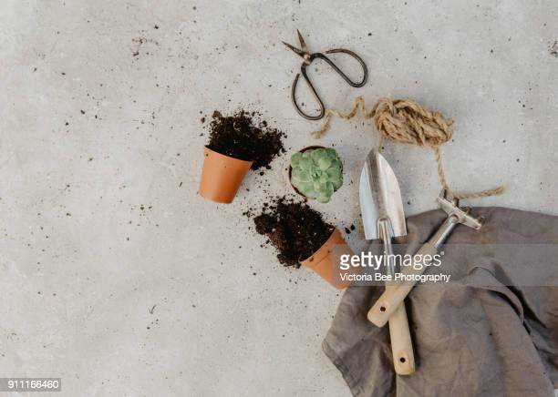 flat lay composition with flower pots. gardening background - pelle photos et images de collection