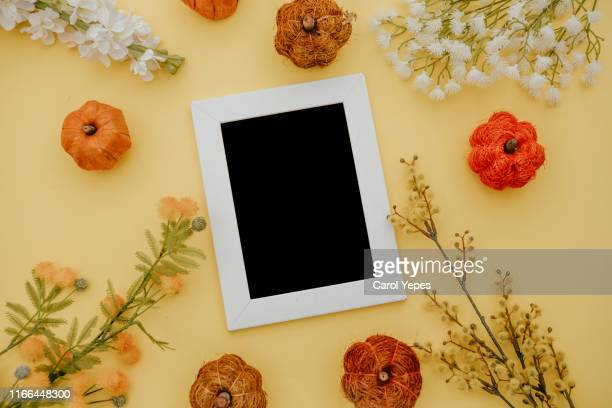 flat lay frame flowers and pumkins.autum concept - mimosa fiore foto e immagini stock