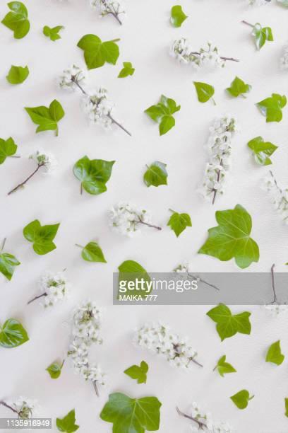 flat lay of flowers and leaves on white background, overhead view. - estampa de folha - fotografias e filmes do acervo