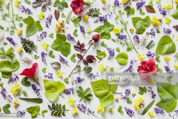 flat lay of flowers and leaves on white background, overhead view. - リーフ柄 ストックフォトと画像