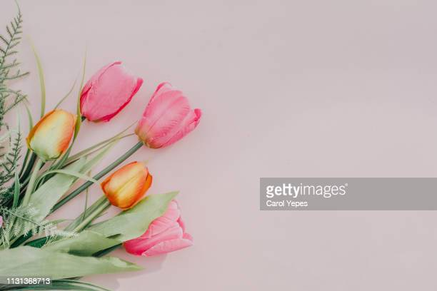 flat lay  tulips in pink background