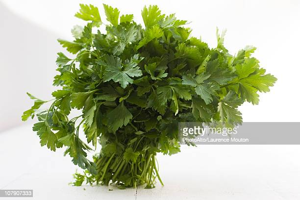 flat leaf parsley bunch - flat leaf parsley stock pictures, royalty-free photos & images