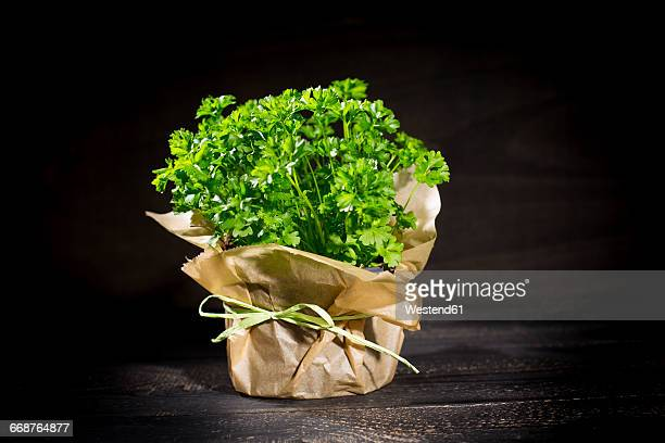 flat leaf parsley in pot - flat leaf parsley stock pictures, royalty-free photos & images