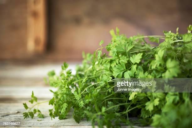 flat leaf parsley - peterselie stockfoto's en -beelden