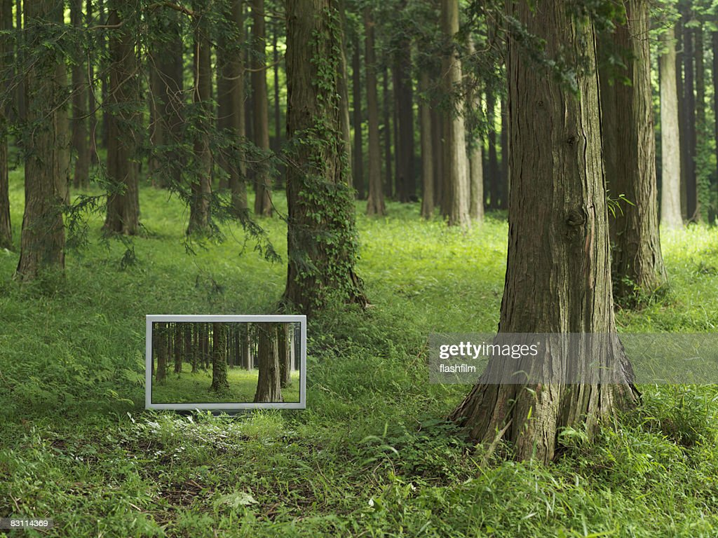 Flat TV placed in the forrest : Stock Photo
