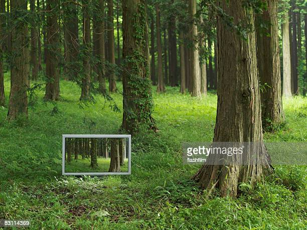 Flat TV placed in the forrest