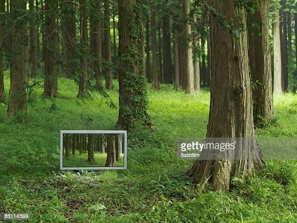 Televisor con pantalla plana de 37 pulgadas ubicado en el forrest