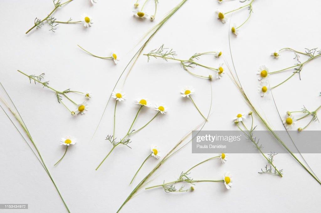 Flatlay with fresh flowers : Stock Photo