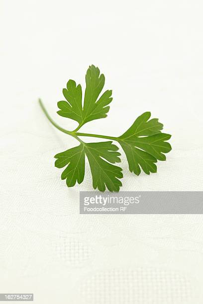 flat-leaf parsley on white background - flat leaf parsley stock photos and pictures