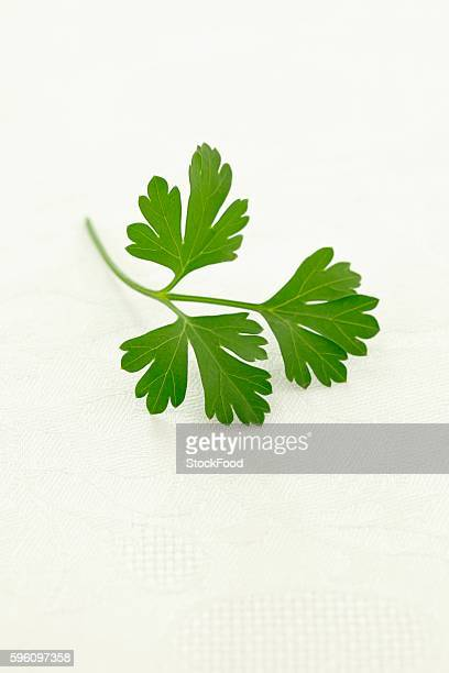 flat-leaf parsley - flat leaf parsley stock photos and pictures
