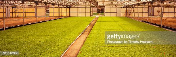 flats of young celery plants in a greenhouse - timothy hearsum stockfoto's en -beelden