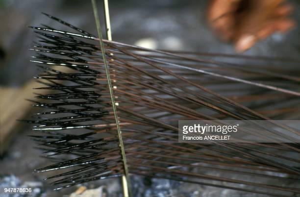 Flêches au curare d'indiens Huaorani en Equateur en 1991