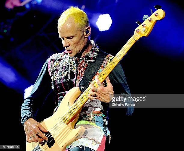 Flea of Red Hot Chili Peppers performs headlining Leeds Festival at Bramham Park on August 28 2016 in Leeds England