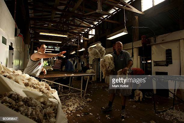 A fleece is skirted and sorted by James Toomey and John Smith during spring shearing at Cherry Hill Pastoral Company property on October 19 2009 in...