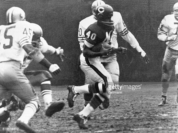 Fleetfooted Chicago Bears halfback Gale Sayers eludes San Francisco 49ers tacklers and runs 80yards for a touchdown in the first quarter of a game...