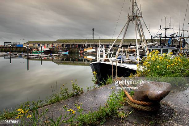 fleetwood commercial harbour, lancashire uk - fishing industry stock pictures, royalty-free photos & images