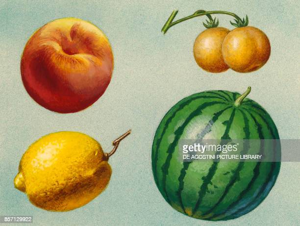 peach potato berries lemon watermelon drawing
